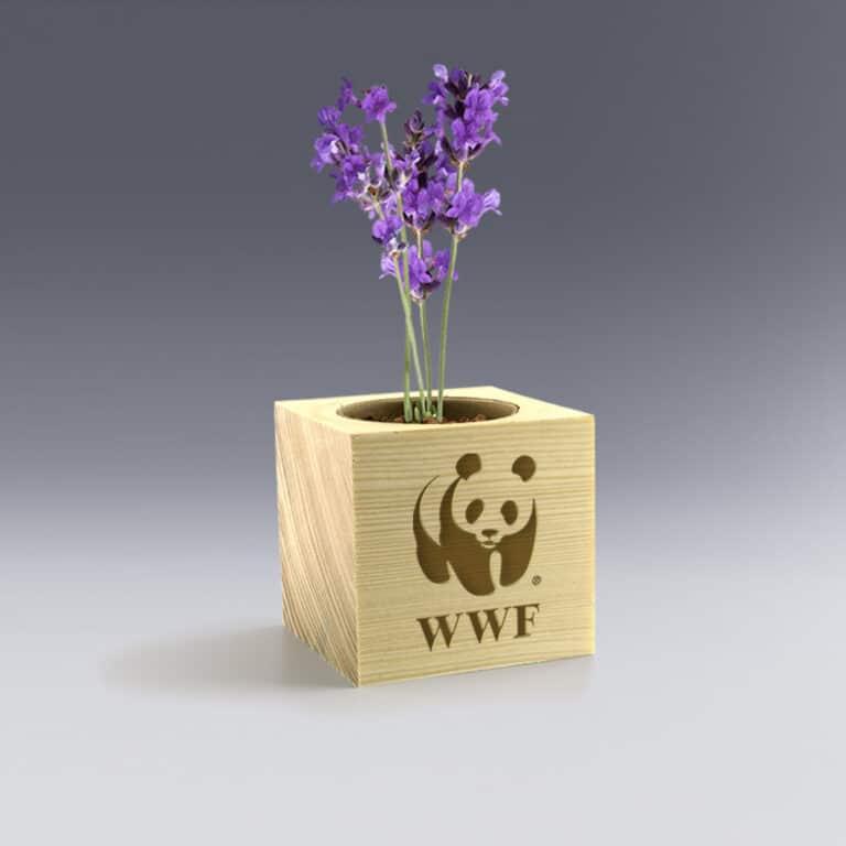 Ecocube Bambou Plante à Personnaliser Logo couleur