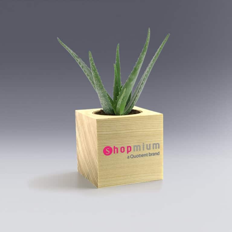 Ecocube Aloe Vera Plante à Personnaliser cadeau d'affaire écolo