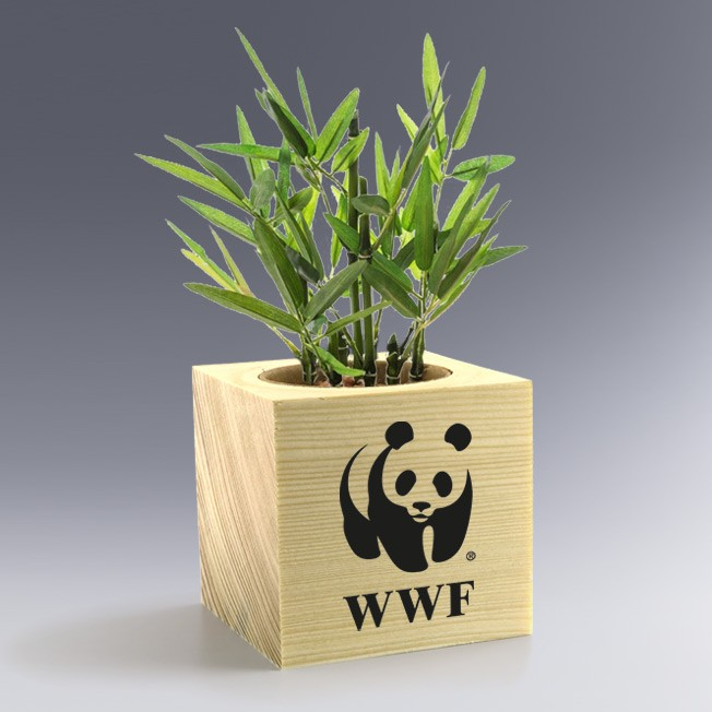 Ecocube Bambou Plante à Personnaliser logo gravé