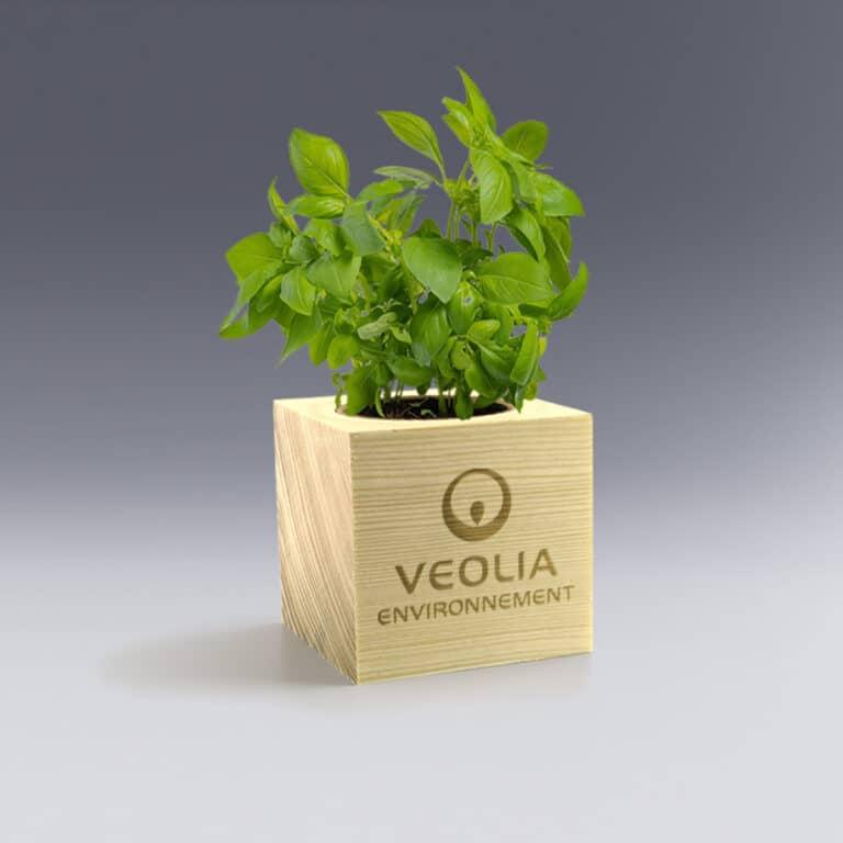 Ecocube Basilic Plante à Personnaliser gravure laser logo