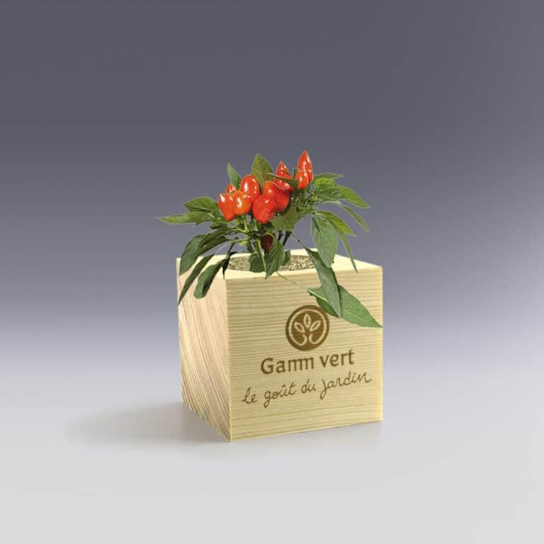 Cadeau d'entreprise Ecocube plante aromatique à personnaliser