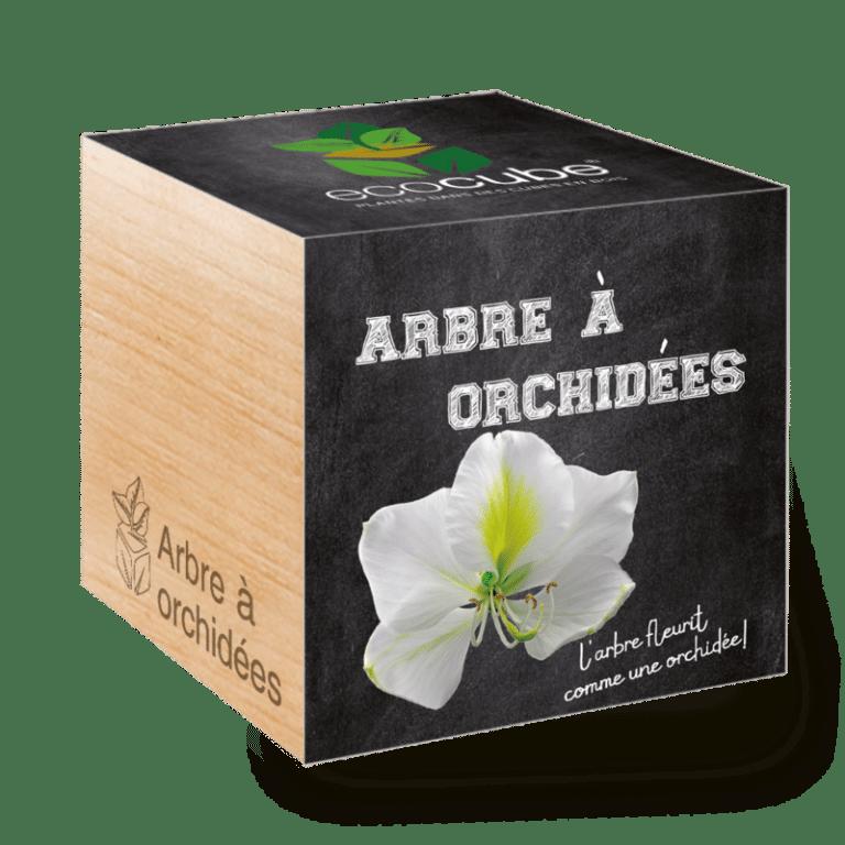 Cadeau d'entreprise Ecocube plante exotique à personnaliser